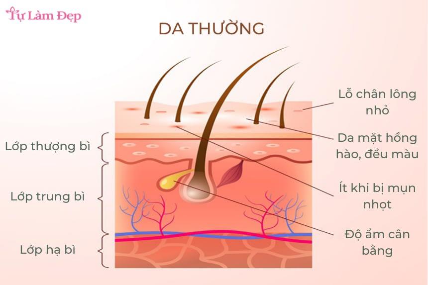 Đặc tính của da thường là gì?